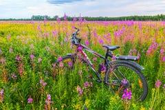 Велосипед среди wildflowers на лужайке леса Стоковое Изображение RF