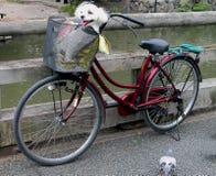 велосипед смешной Стоковые Фото