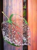 Вена лист лежа деревянная доска Стоковые Изображения RF