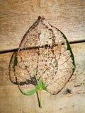 Вена лист лежа на деревянной доске Стоковая Фотография
