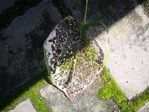Вена лист лежа на кирпичах Стоковая Фотография RF
