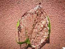 Вена лист лежа на красной предпосылке Стоковые Фотографии RF