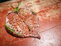 Вена лист лежа на красном цвете покрасила доску Стоковые Изображения RF