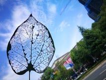 Вена лист с голубым небом Стоковое Изображение