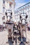 вена лошади fiaker кареты Австралии традиционная Стоковые Изображения RF