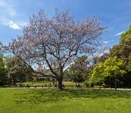 Вена парка города, Австрия Стоковые Фотографии RF