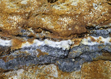 Вена Hyrothermal Стоковое Фото