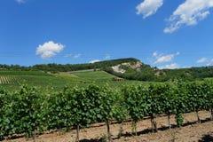 Венгрия - ландшафт виноградников Tokaj Стоковые Фото