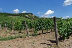 Венгрия - ландшафт виноградников Tokaj Стоковое Изображение RF