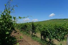 Венгрия - ландшафт виноградников Tokaj Стоковые Изображения RF