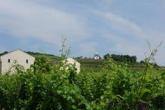 Венгрия - предпосылка виноградников с виноградниками Tokaj Стоковое фото RF