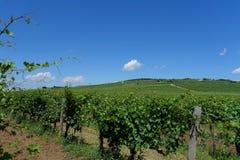 Венгрия - предпосылка виноградников с виноградниками Tokaj Стоковые Фотографии RF