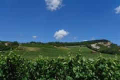 Венгрия - предпосылка виноградников с виноградниками Tokaj Стоковые Изображения