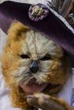 Венецианские маски масленицы Стоковое Фото