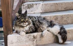 Венецианский кот Стоковые Изображения RF