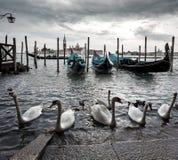 Венеция, Италия, небо лебедя gondoliers Стоковые Фотографии RF
