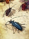 Венеция - стеклянные насекомые Стоковые Изображения