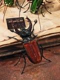 Венеция - стеклянные насекомые Стоковые Изображения RF