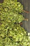 Веники для бани Стоковое Фото