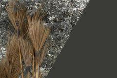Веник кокоса Стоковое Изображение RF
