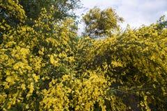 Веник цветка Стоковое Изображение