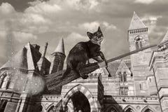 Веник Clarabelle волшебный Стоковые Фото
