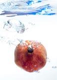 Вениса в воде Стоковое Фото