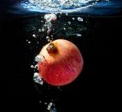 Вениса в воде Стоковая Фотография
