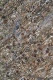 венисы Стоковая Фотография RF
