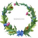 Венки от листьев thistle и дуба с голубой лентой шелка иллюстрация штока