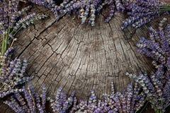 Венок лаванды Стоковые Изображения RF
