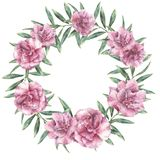 Венок акварели флористический экзотический Вручите покрашенную границу с цветками олеандра при листья и ветвь изолированные на бе Стоковые Изображения RF