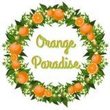 Венок апельсинов иллюстрация штока