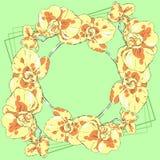 Венок 4 желтых орхидей на зеленой предпосылке Стоковое Изображение