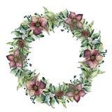 Венок зимы акварели с цветками морозника Вручите покрашенную ветвь snowberry и евкалипта изолированную на белизне Стоковые Фото