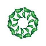 Венок листьев 1 зеленого цвета Стоковое Изображение