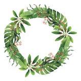 Венок листьев и ягод покрашенной вручную акварели тропический Стоковые Изображения RF
