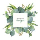 Венок квадрата вектора акварели с листьями и ветвями евкалипта Стоковое Фото