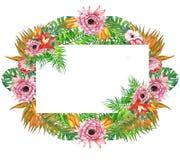 Венок листьев и цветков акварели тропический! Карточка акварели экзотическая флористическая Вручите покрашенную троповую рамку с  Стоковое Фото