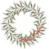Венок осени акварели элегантный Рука покрасила флористическую ветвь с листьями, красными ягодами изолированными на белом backgrou Стоковая Фотография RF