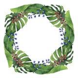Венок покрашенной вручную акварели тропический Стоковые Изображения RF