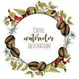 Венок, рамка круга от кофе акварели разветвляет, цветки и фасоли на различных этапах созревания иллюстрация штока