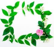 Венок розового чая розовый и цветок и листь жасмина Стоковые Фото