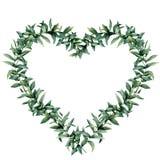 Венок сердца евкалипта акварели Вручите покрашенную границу при ветвь и листья евкалипта изолированные на белой предпосылке Стоковые Фотографии RF