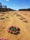 Венок цветет западная Австралия стоковая фотография