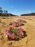 Венок цветет западная Австралия стоковое фото
