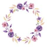 Венок чувствительного розового фиолетового лета гирлянды цветка акварели покрашенный рукой флористический Стоковое Изображение RF