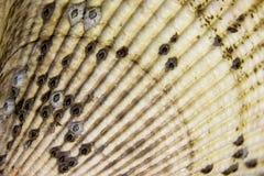 Вентилятор раковины стоковое изображение