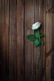 венчание кец розовое Стоковая Фотография RF