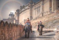 венчик над фортом Джайпуром Amer слонов стоковая фотография rf